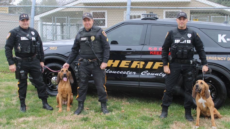 Photo of Bloodhounds with Sheriff's Officers