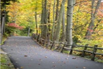Paved Trail Under Fall-Colored Trees